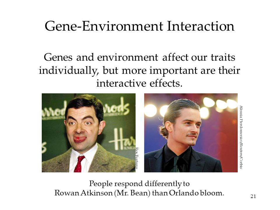 21 Gene-Environment Interaction Genes and environment affect our traits individually, but more important are their interactive effects. People respond