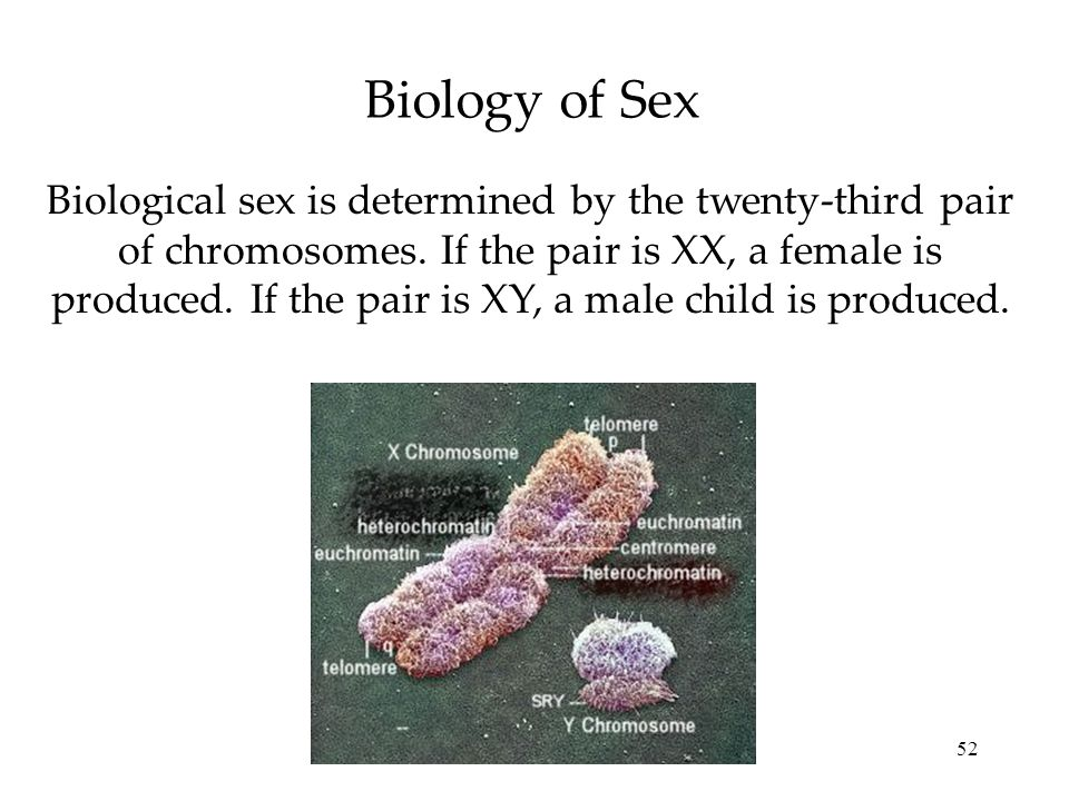 52 Biology of Sex Biological sex is determined by the twenty-third pair of chromosomes. If the pair is XX, a female is produced. If the pair is XY, a