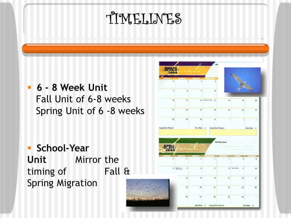 TIMELINES 6 - 8 Week Unit Fall Unit of 6-8 weeks Spring Unit of 6 -8 weeks School-Year Unit Mirror the timing of Fall & Spring Migration