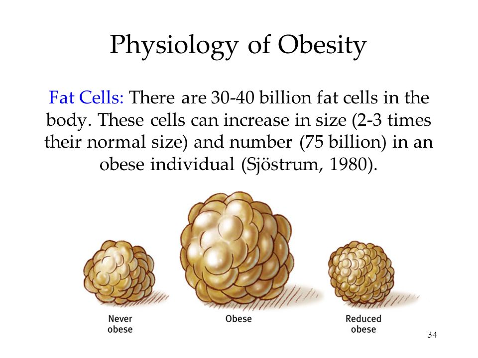 34 Physiology of Obesity Fat Cells: There are 30-40 billion fat cells in the body. These cells can increase in size (2-3 times their normal size) and