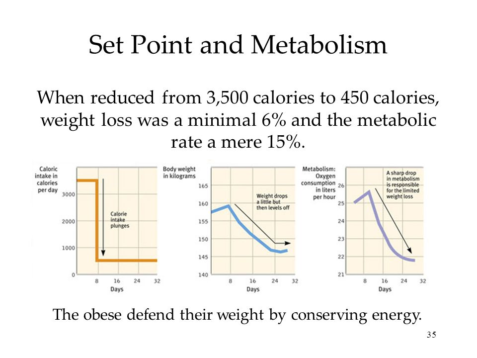 35 Set Point and Metabolism When reduced from 3,500 calories to 450 calories, weight loss was a minimal 6% and the metabolic rate a mere 15%. The obes