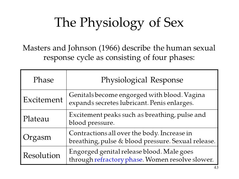43 The Physiology of Sex Masters and Johnson (1966) describe the human sexual response cycle as consisting of four phases: PhasePhysiological Response