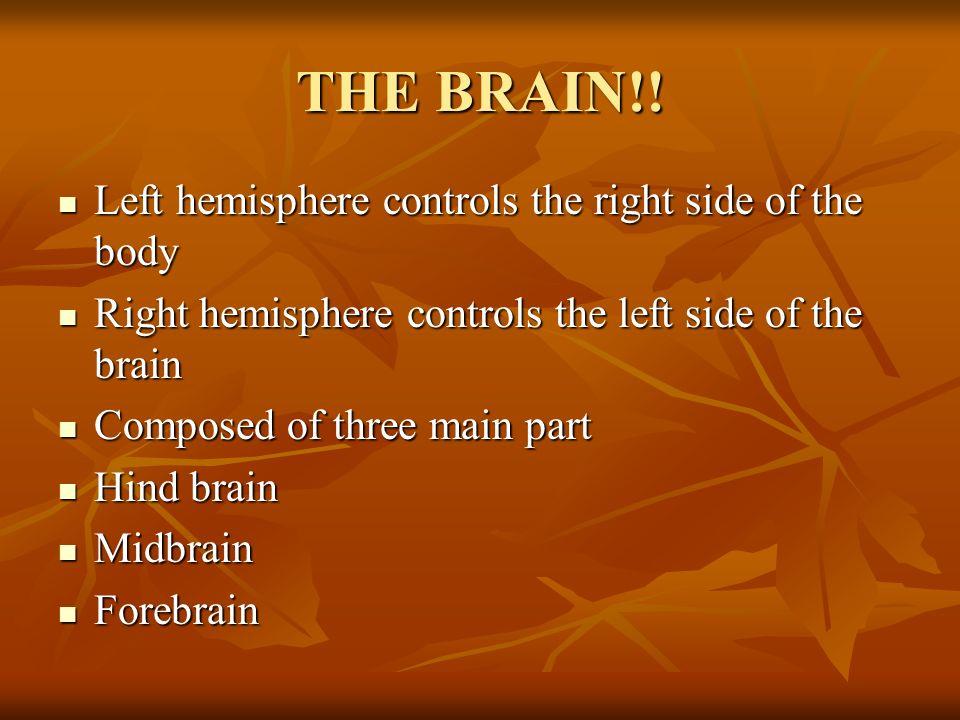 THE BRAIN!! Left hemisphere controls the right side of the body Left hemisphere controls the right side of the body Right hemisphere controls the left