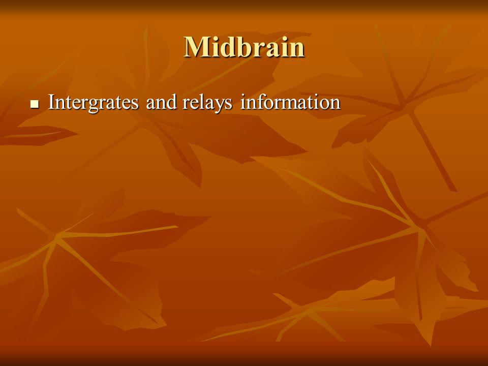 Midbrain Intergrates and relays information Intergrates and relays information