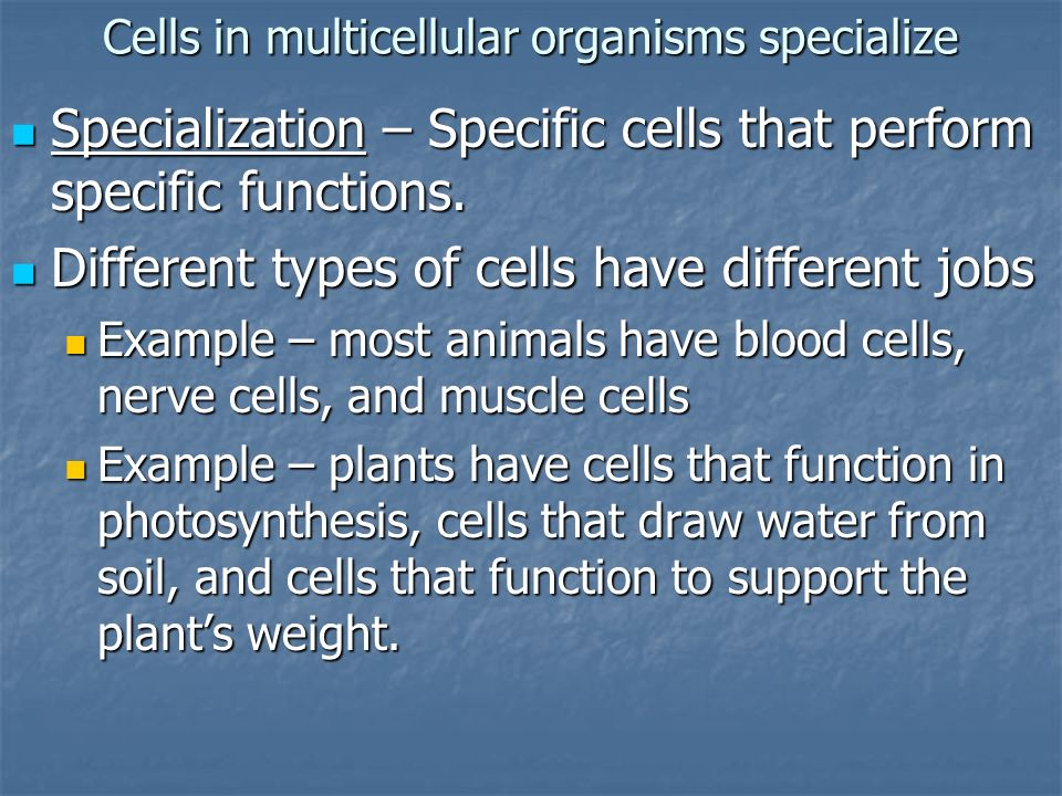 Cells in multicellular organisms specialize Specialization – Specific cells that perform specific functions. Specialization – Specific cells that perf