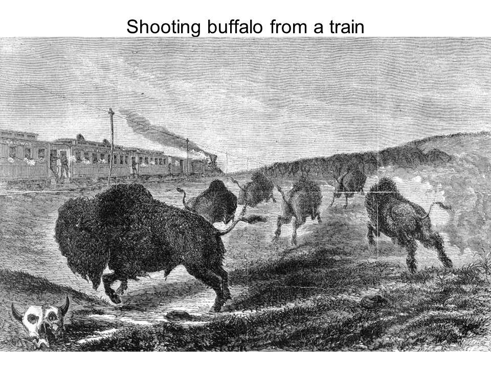 Shooting buffalo from a train