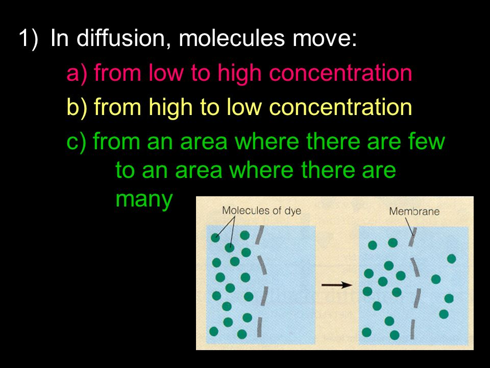 1)In diffusion, molecules move: a) from low to high concentration b) from high to low concentration c) from an area where there are few to an area whe