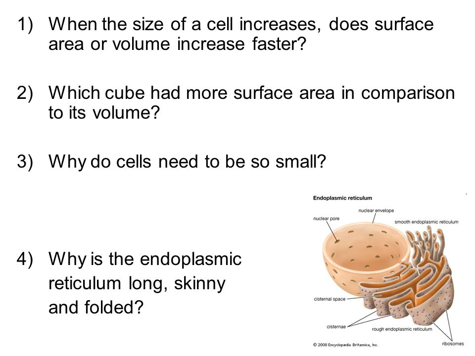 1)When the size of a cell increases, does surface area or volume increase faster? 2)Which cube had more surface area in comparison to its volume? 3)Wh