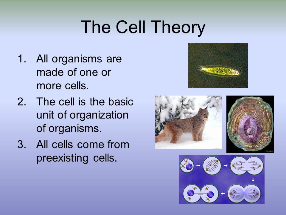 The Cell Theory 1.All organisms are made of one or more cells. 2.The cell is the basic unit of organization of organisms. 3.All cells come from preexi