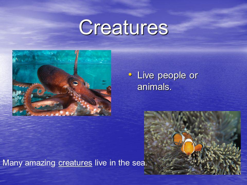 Creatures Live people or animals. Live people or animals. Many amazing creatures live in the sea.