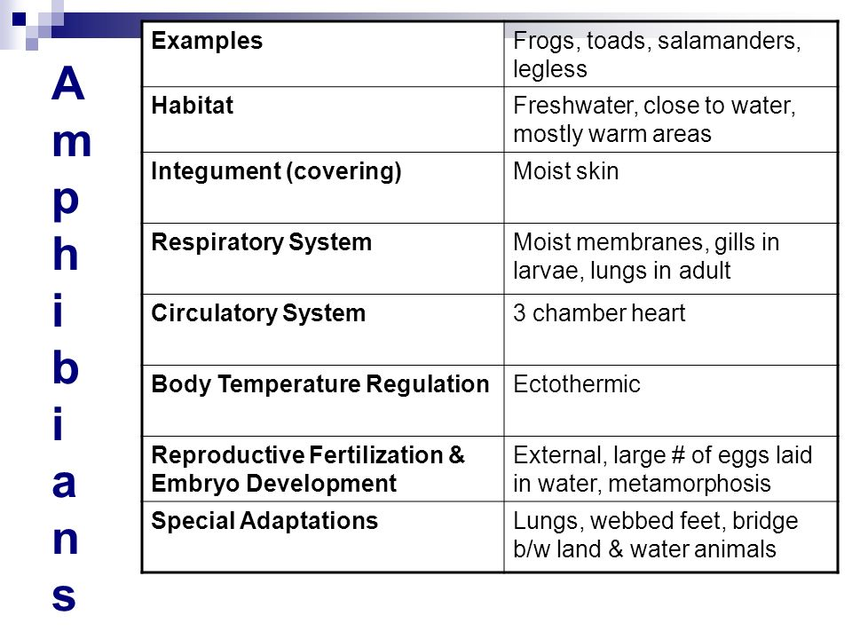 AmphibiansAmphibians ExamplesFrogs, toads, salamanders, legless HabitatFreshwater, close to water, mostly warm areas Integument (covering)Moist skin R