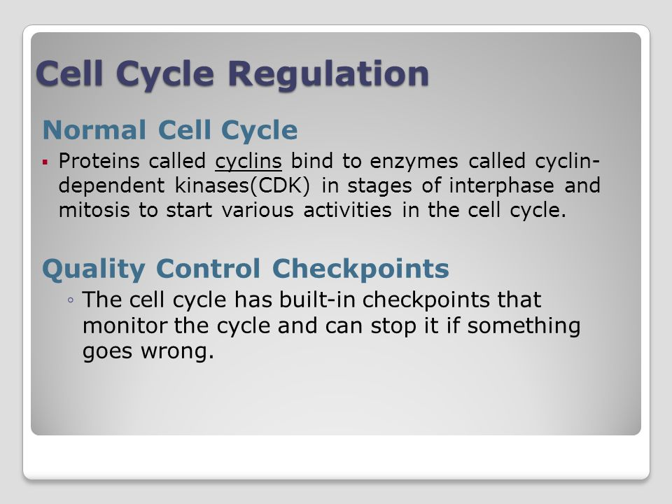 Cell Cycle Regulation Normal Cell Cycle Proteins called cyclins bind to enzymes called cyclin- dependent kinases(CDK) in stages of interphase and mitosis to start various activities in the cell cycle.