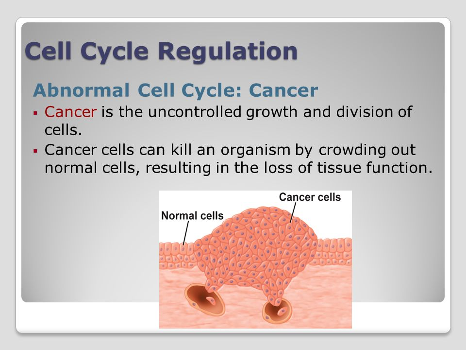 Cell Cycle Regulation Abnormal Cell Cycle: Cancer Cancer is the uncontrolled growth and division of cells.
