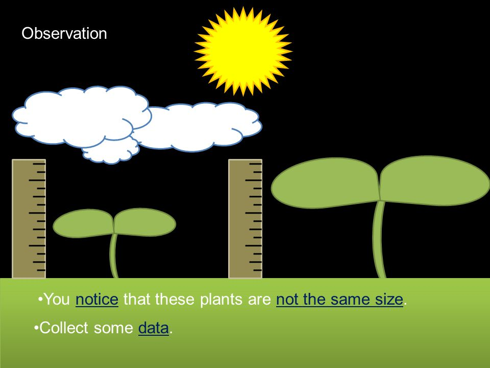 Full Sun ShadeShade ShadeShade If plants are in full sunlight then they grow taller because they can photosynthesize more.