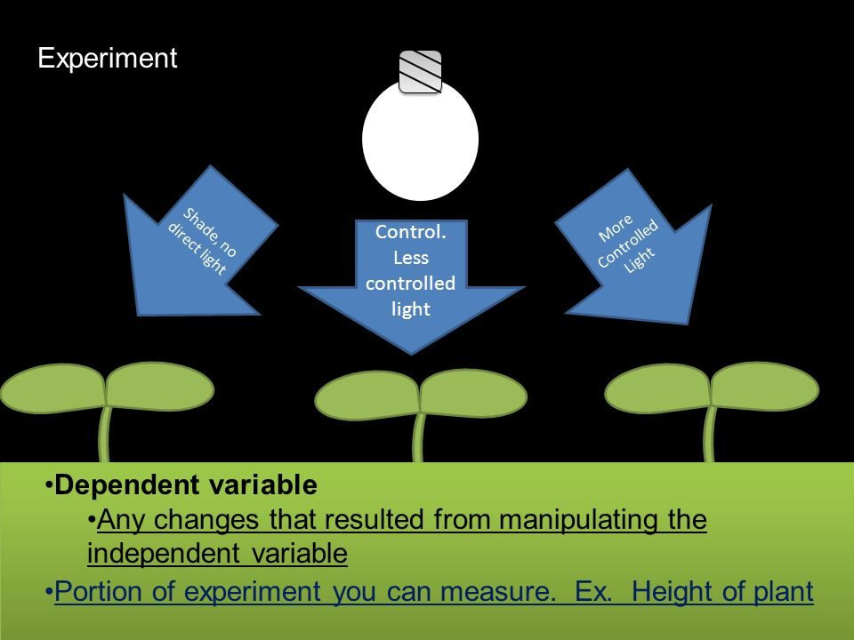 Control. Less controlled light More Controlled Light Portion of experiment you can measure. Ex. Height of plant Experiment Dependent variable Any chan