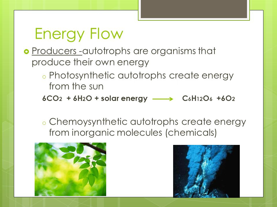 Energy Flow Producers -autotrophs are organisms that produce their own energy o Photosynthetic autotrophs create energy from the sun 6CO 2 + 6H 2 O +