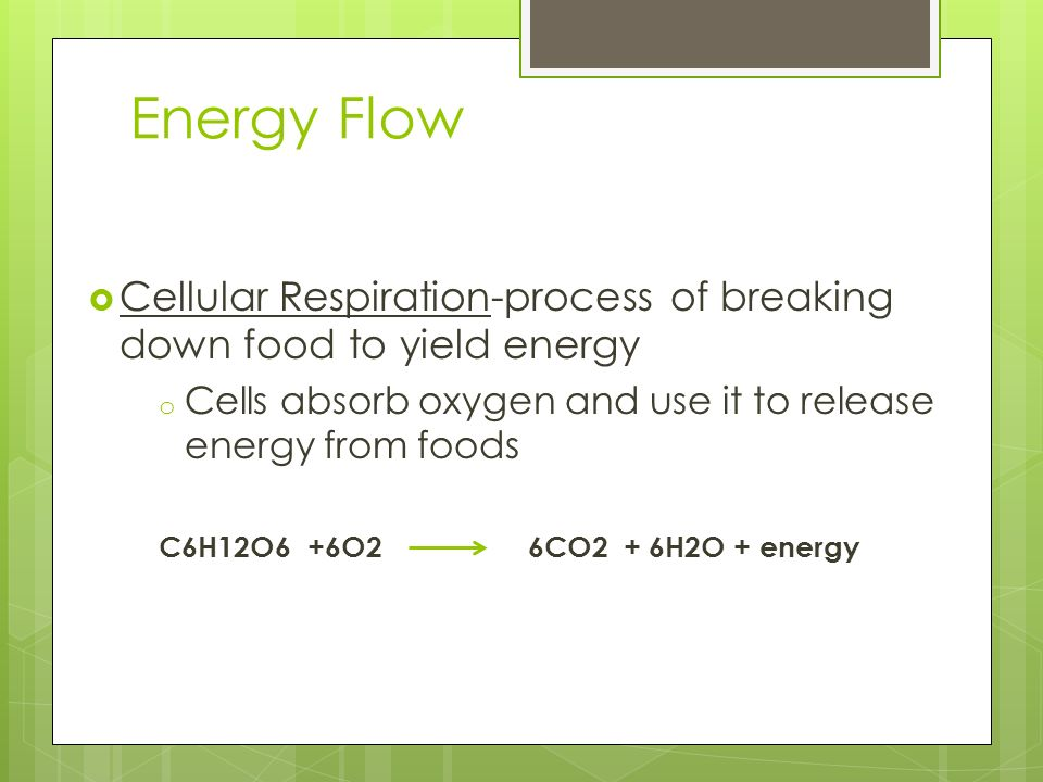 Energy Flow Cellular Respiration-process of breaking down food to yield energy o Cells absorb oxygen and use it to release energy from foods C6H12O6 +
