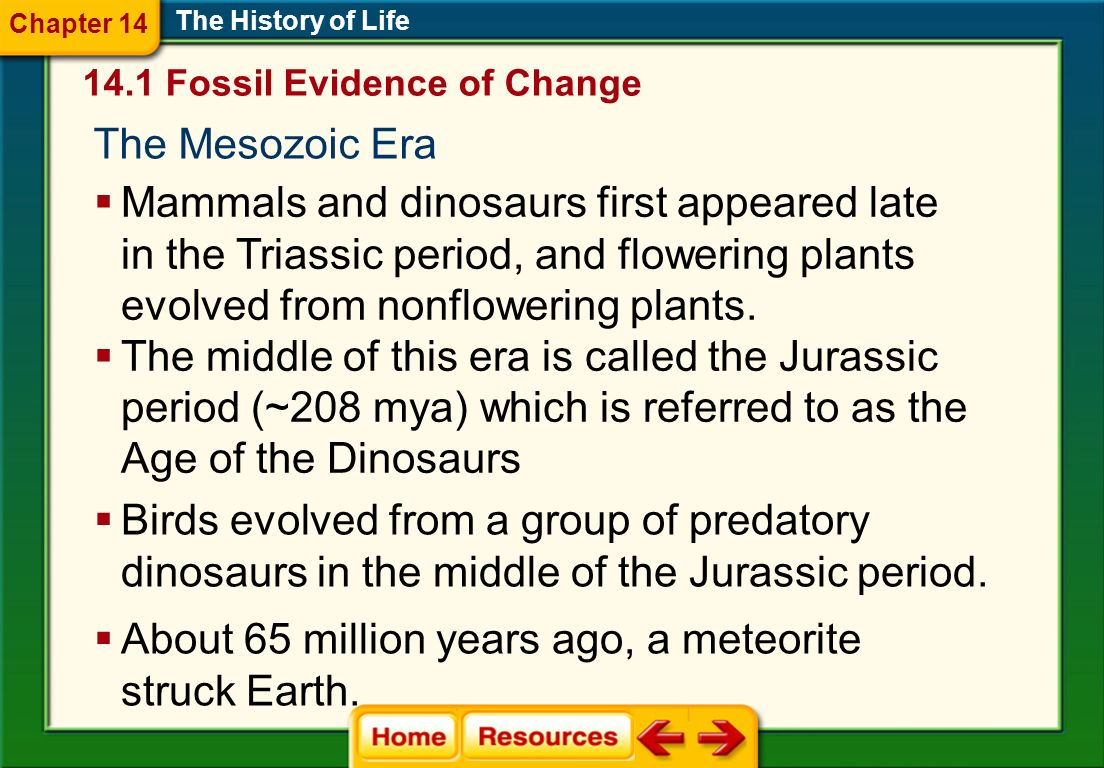 The Mesozoic Era The History of Life Mammals and dinosaurs first appeared late in the Triassic period, and flowering plants evolved from nonflowering