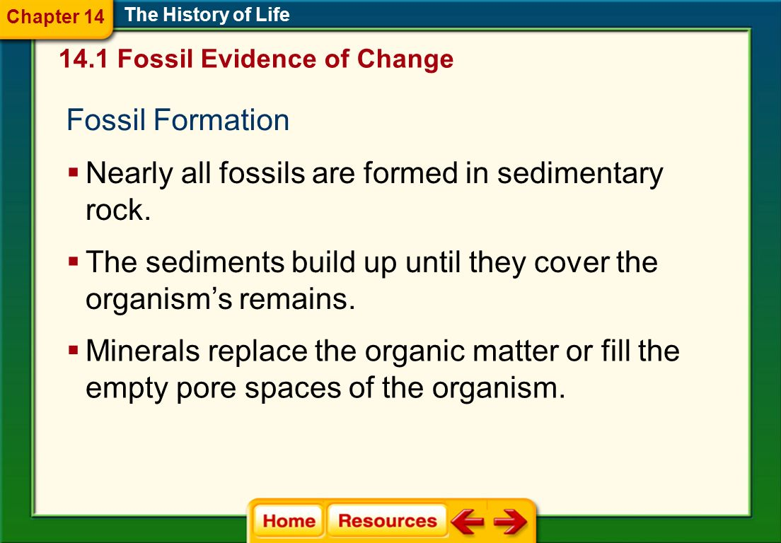 Fossil Formation The History of Life Nearly all fossils are formed in sedimentary rock. The sediments build up until they cover the organisms remains.