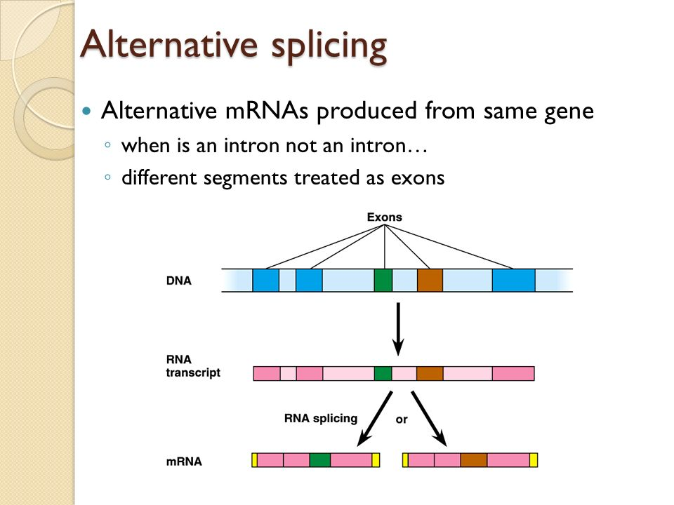 mRNA EDITING ALL ENZYMES ARE PROTEINS? RIBOZYMES-RNA molecules that function as enzymes (In some organisms pre-RNA can remove its own introns) PROCESS