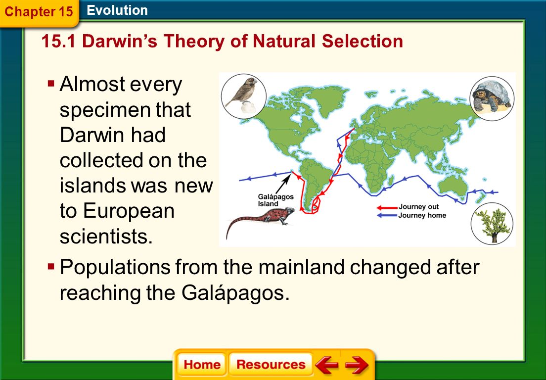 The Galápagos Islands Evolution Darwin began to collect mockingbirds, finches, and other animals on the four islands. He noticed that the different is