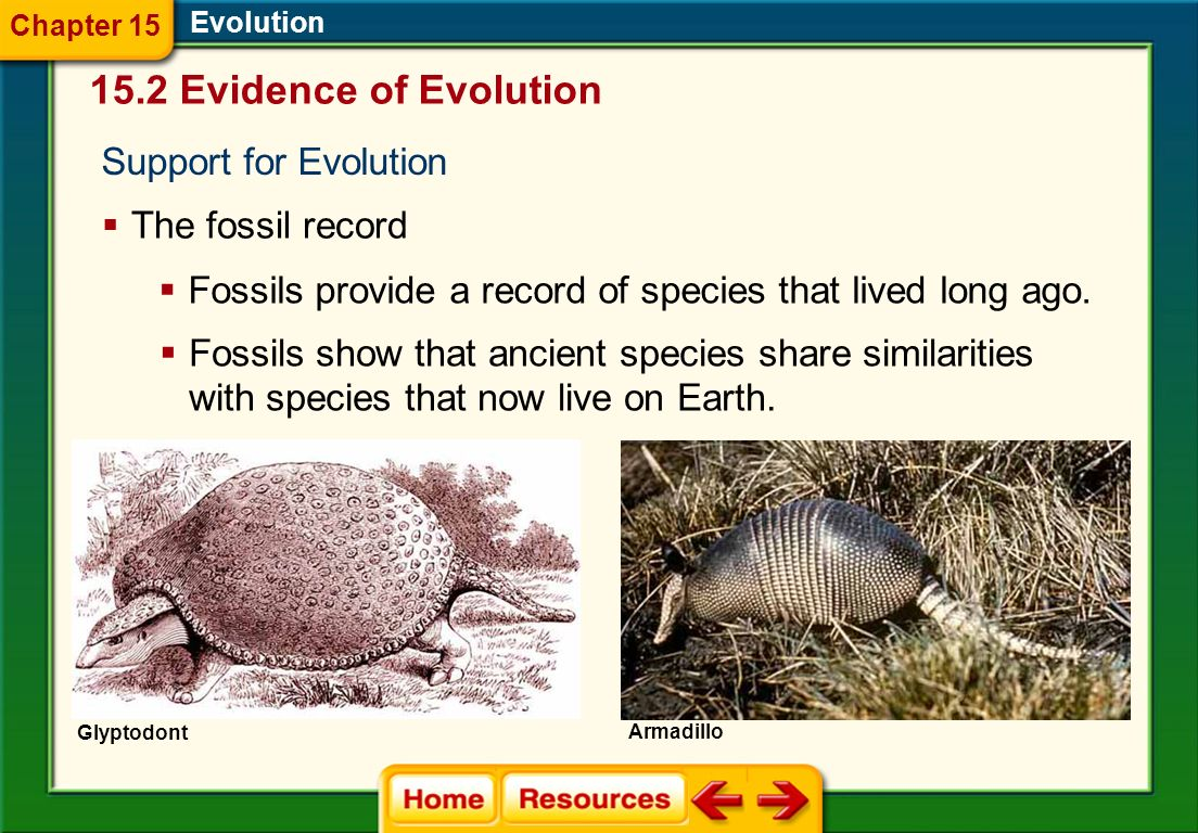 15.2 Evidence of Evolution Support for Evolution Evolution The fossil record Glyptodont Fossils provide a record of species that lived long ago.