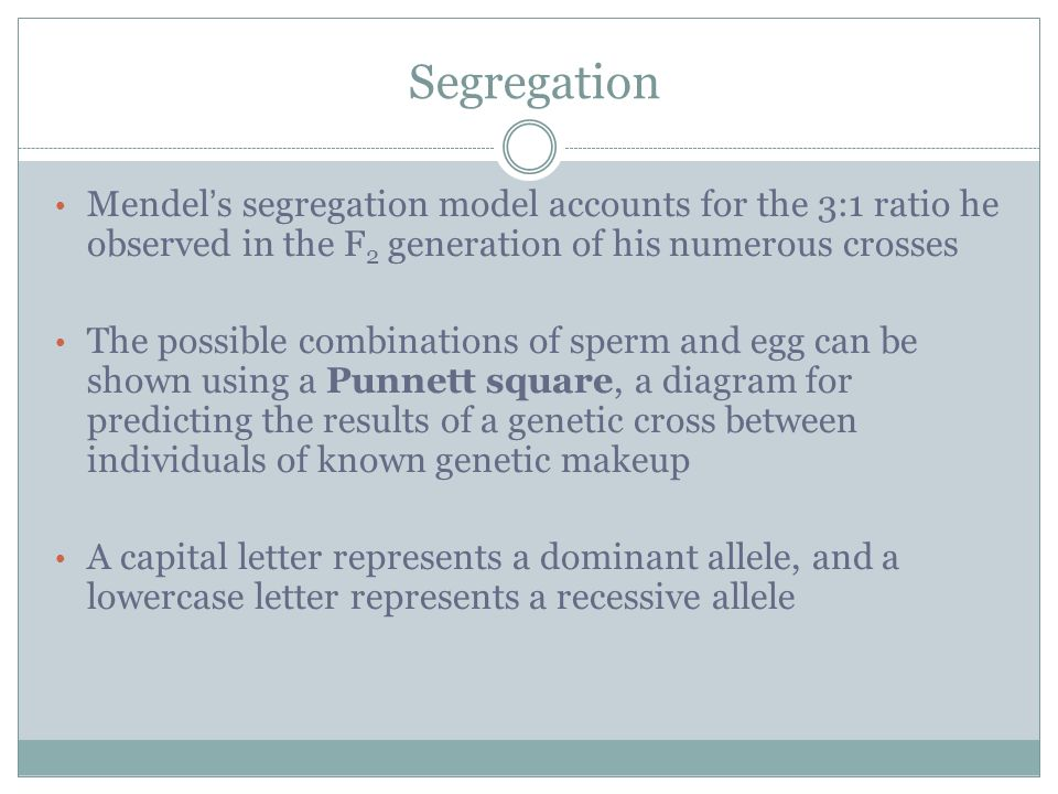 Mendel s segregation model accounts for the 3:1 ratio he observed in the F 2 generation of his numerous crosses The possible combinations of sperm and