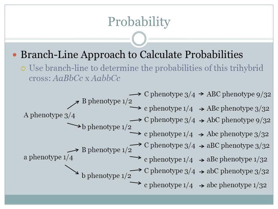 Probability Branch-Line Approach to Calculate Probabilities Use branch-line to determine the probabilities of this trihybrid cross: AaBbCc x AabbCc A