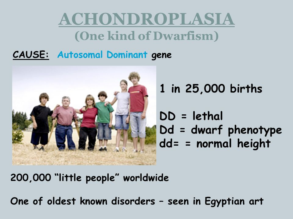 ACHONDROPLASIA (One kind of Dwarfism) CAUSE: Autosomal Dominant gene 200,000 little people worldwide One of oldest known disorders – seen in Egyptian