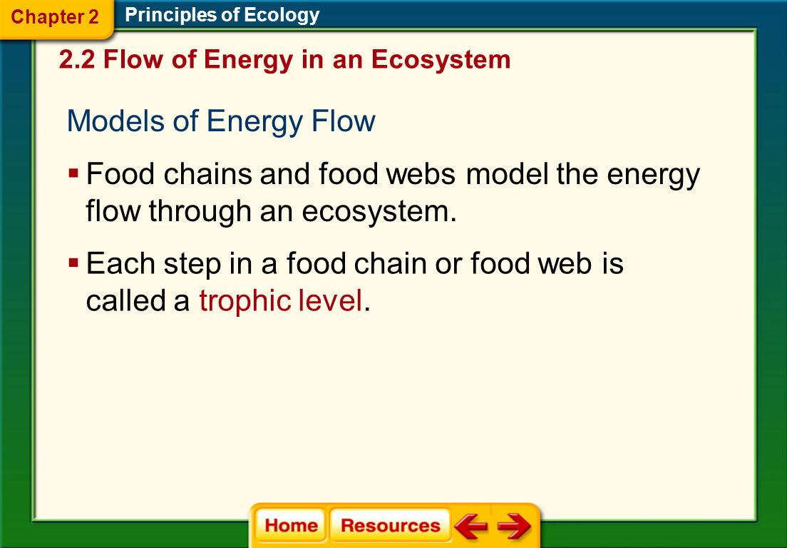 Principles of Ecology Food Webs A food web is a model representing the many interconnected food chains and pathways in which energy flows through a gr