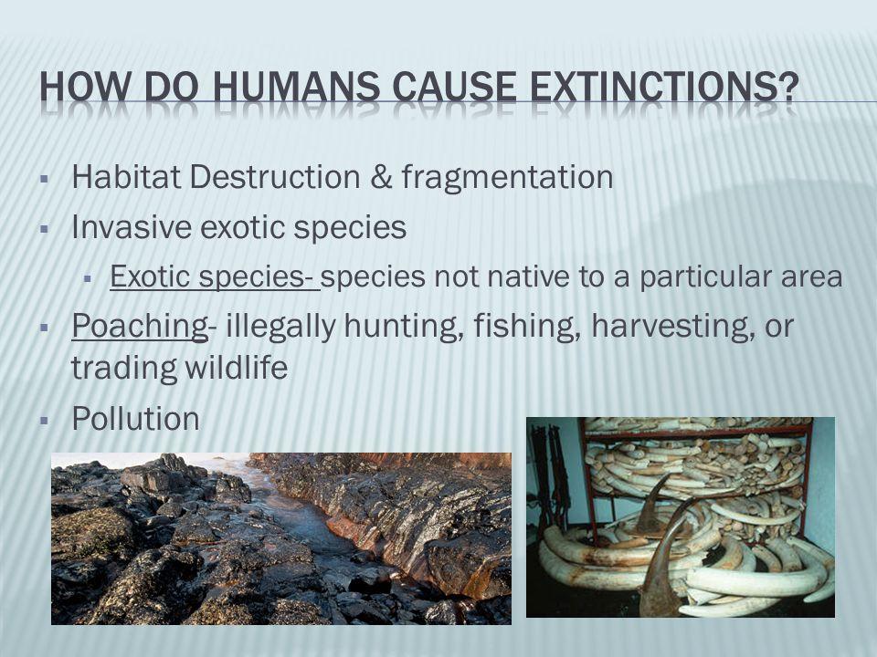 Habitat Destruction & fragmentation Invasive exotic species Exotic species- species not native to a particular area Poaching- illegally hunting, fishi