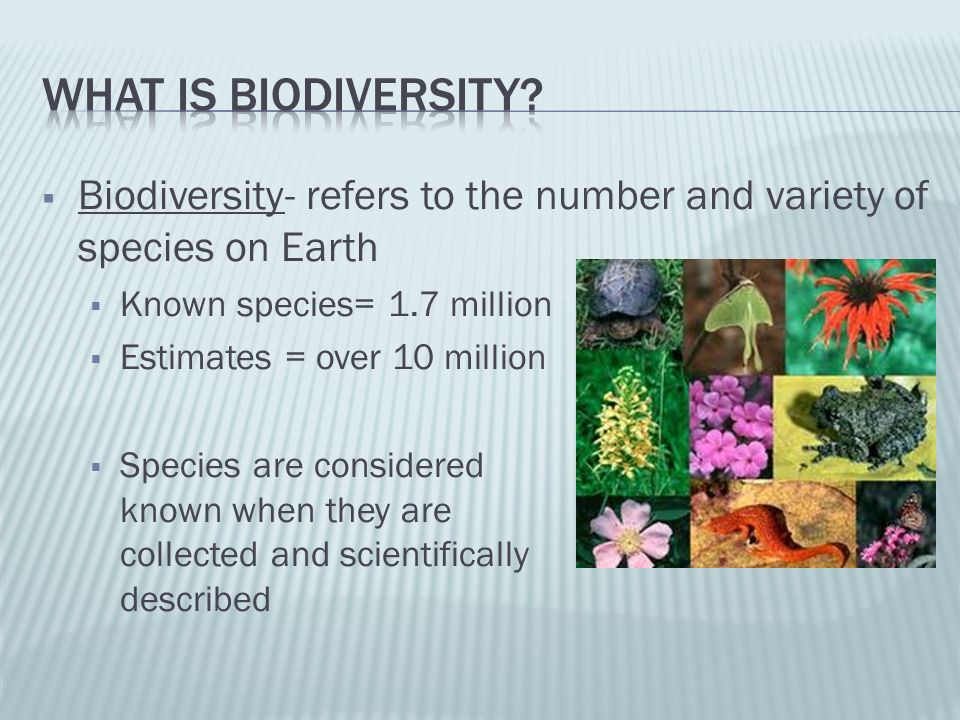 Species diversity- # of different species in an area (also called biodiversity) Ecosystem diversity- variety of habitats and ecological processes w/in an ecosystem Genetic diversity-different genes contained w/in all members of a population Gene- piece of DNA that codes for specific trait, that could be inherited by offspring