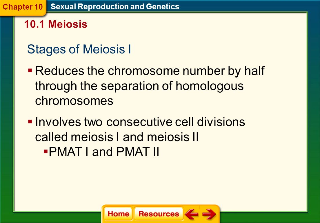 Meiosis I The sexual life cycle in animals involves meiosis. Sexual Reproduction and Genetics Meiosis produces gametes. 10.1 Meiosis When gametes comb