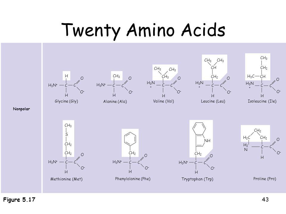 43 Twenty Amino Acids 20 different amino acids make up proteins O O–O– H H3N+H3N+ C C O O–O– H CH 3 H3N+H3N+ C H C O O–O– C C O O–O– H H3N+H3N+ CH CH