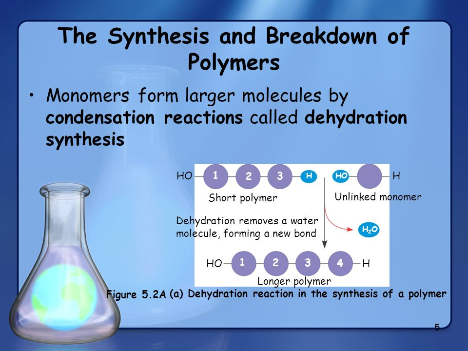 5 The Synthesis and Breakdown of Polymers Monomers form larger molecules by condensation reactions called dehydration synthesis (a) Dehydration reacti