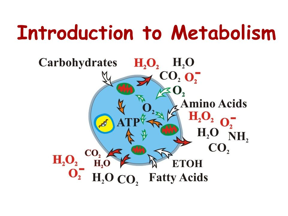 P i ADP Energy for cellular work provided by the loss of phosphate from ATP Energy from catabolism (used to charge up ADP into ATP ATP +