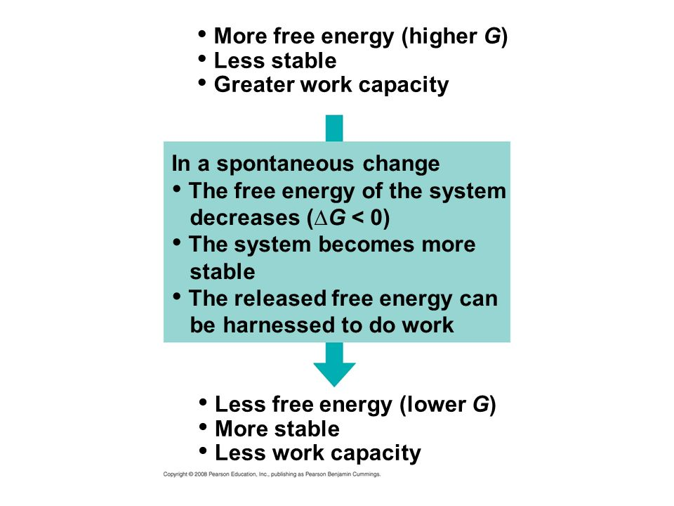Less free energy (lower G) More stable Less work capacity More free energy (higher G) Less stable Greater work capacity In a spontaneous change The fr