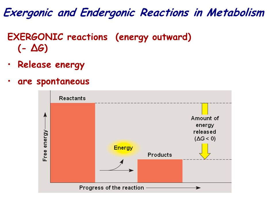 Exergonic and Endergonic Reactions in Metabolism EXERGONIC reactions (energy outward) (- G) Release energy are spontaneous