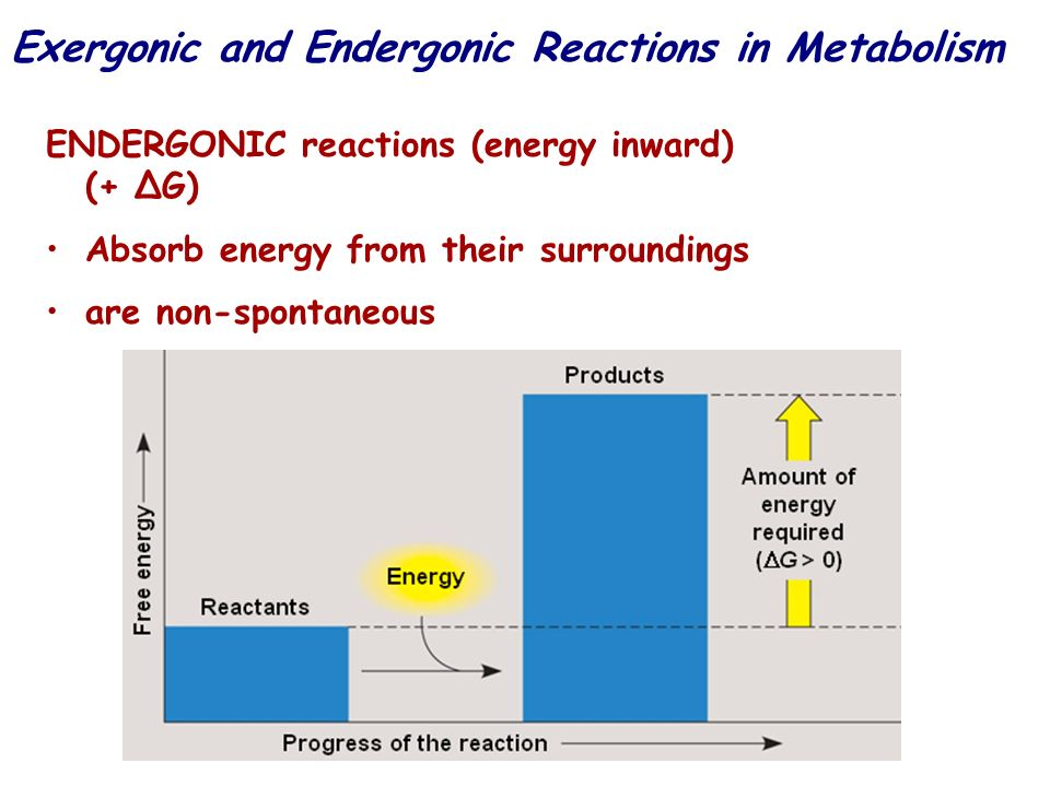 Exergonic and Endergonic Reactions in Metabolism ENDERGONIC reactions (energy inward) (+ G) Absorb energy from their surroundings are non-spontaneous