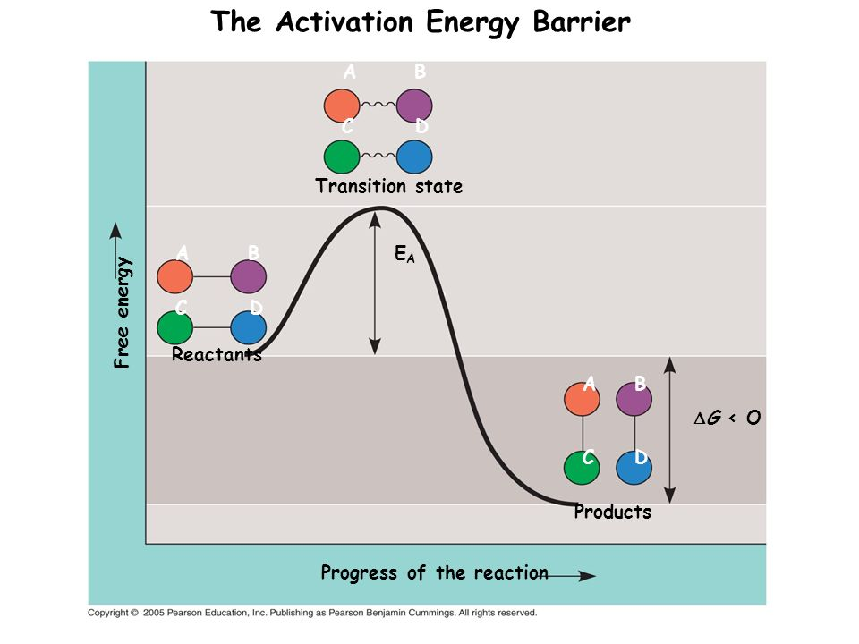 Transition state CD A B EAEA Products CD A B G < O Progress of the reaction Reactants C D A B Free energy The Activation Energy Barrier