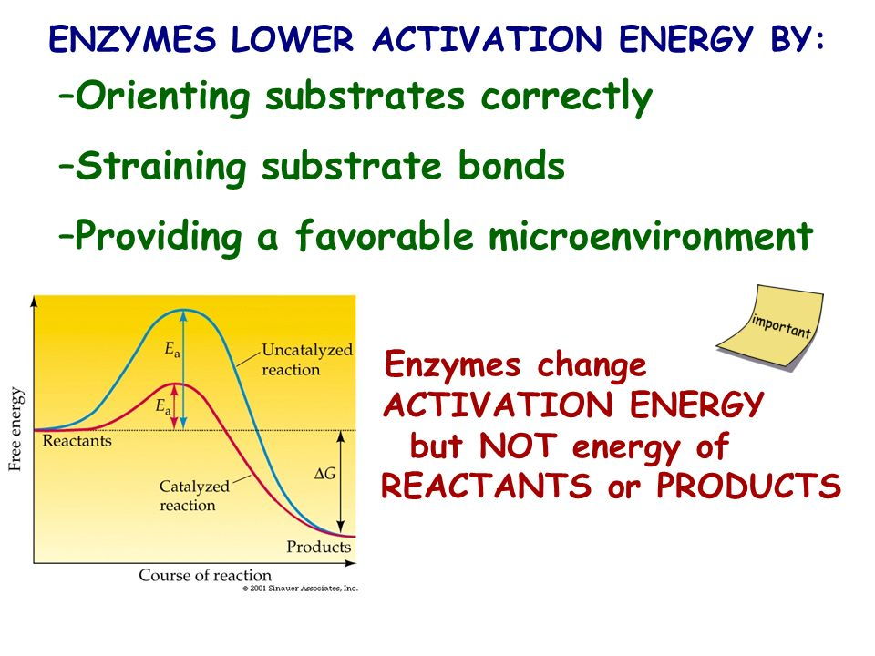 ENZYMES LOWER ACTIVATION ENERGY BY: –Orienting substrates correctly –Straining substrate bonds –Providing a favorable microenvironment Enzymes change