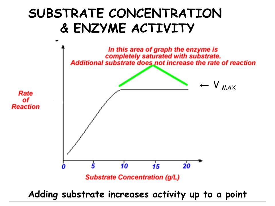 SUBSTRATE CONCENTRATION & ENZYME ACTIVITY V MAX Adding substrate increases activity up to a point