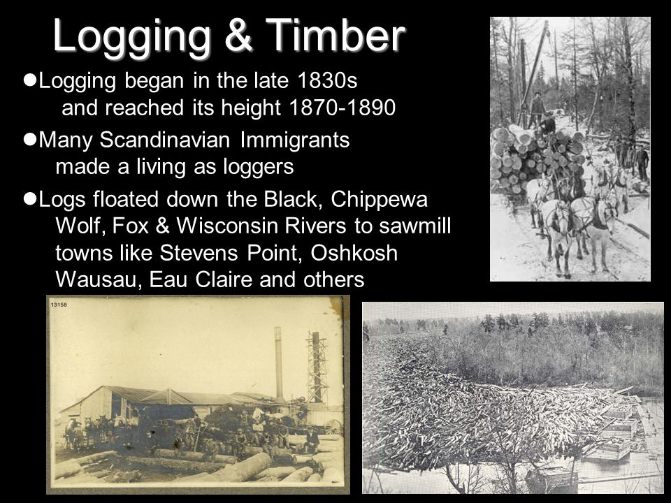 Logging & Timber Logging began in the late 1830s and reached its height 1870-1890 Many Scandinavian Immigrants made a living as loggers Logs floated d