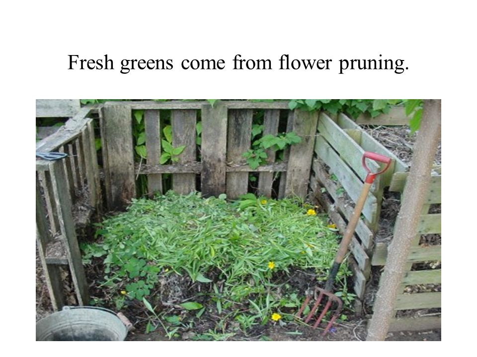 Fresh greens come from flower pruning.