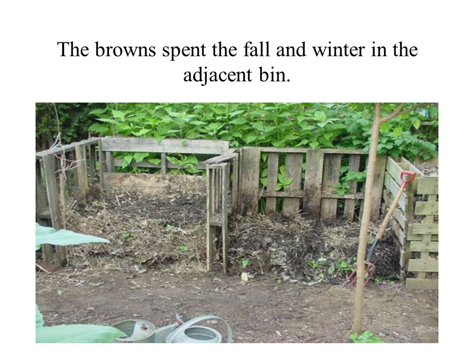 The browns spent the fall and winter in the adjacent bin.
