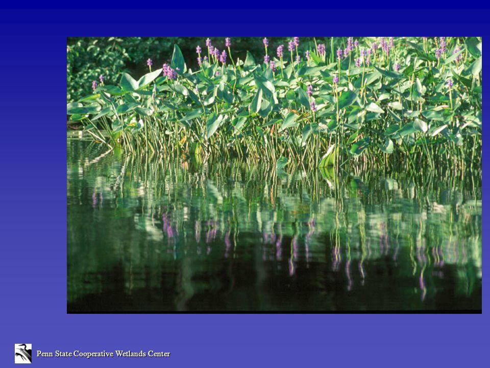 0100 Disturbance Score 50 Spring Creek Little Fishing Creek Juniata Brandywine Yellow Breeches Shavers Creek Bushkill White Deer Creek 2575 Degraded Reference Standard Level 1 Watershed Scores Based on 50 Randomly-Selected Wetlands