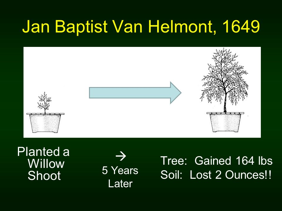 Jan Baptist Van Helmont, 1649 Planted a Willow Shoot 5 Years Later Tree: Gained 164 lbs Soil: Lost 2 Ounces!!