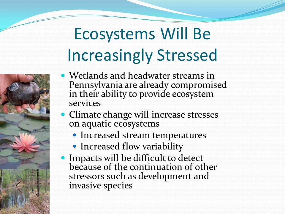 Ecosystems Will Be Increasingly Stressed Wetlands and headwater streams in Pennsylvania are already compromised in their ability to provide ecosystem services Climate change will increase stresses on aquatic ecosystems Increased stream temperatures Increased flow variability Impacts will be difficult to detect because of the continuation of other stressors such as development and invasive species