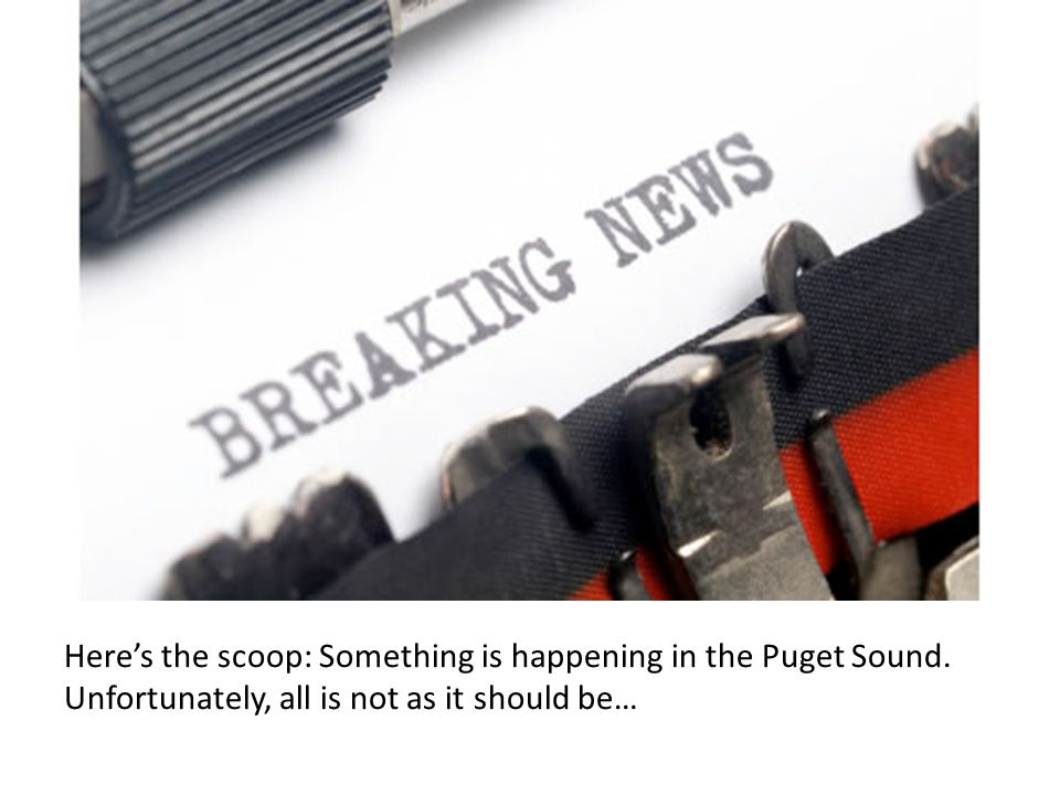 Heres the scoop: Something is happening in the Puget Sound.