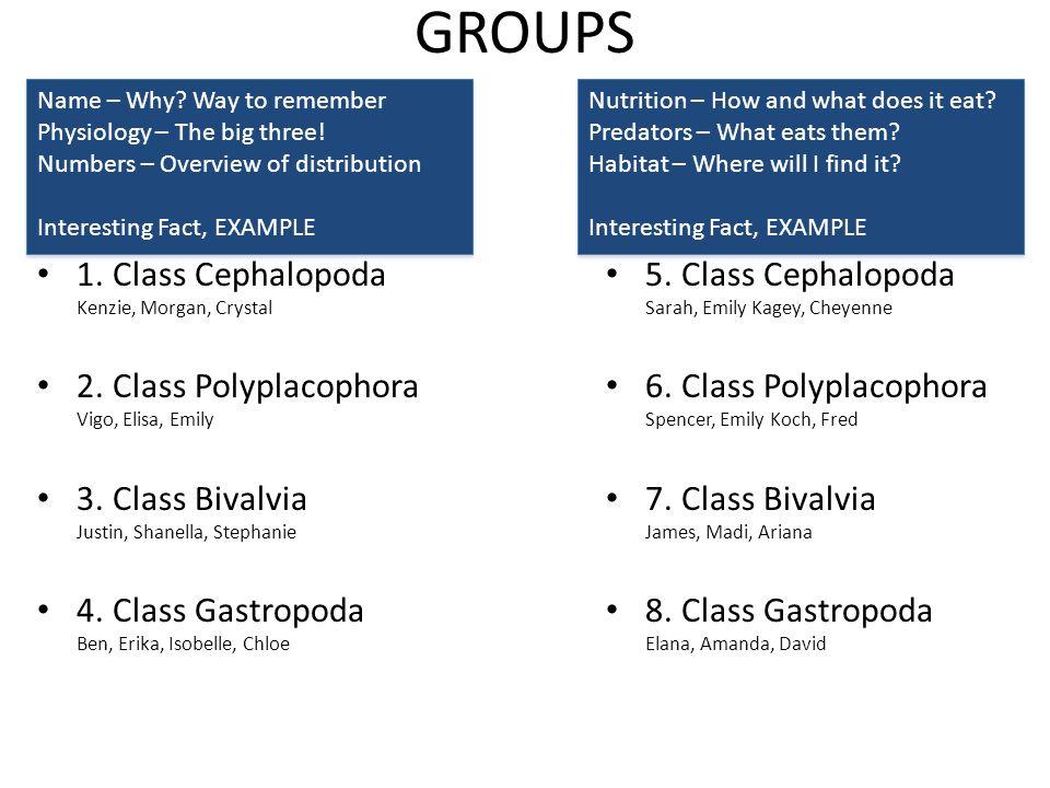 GROUPS 1. Class Cephalopoda Kenzie, Morgan, Crystal 2. Class Polyplacophora Vigo, Elisa, Emily 3. Class Bivalvia Justin, Shanella, Stephanie 4. Class